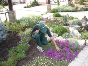 услуги садовника в Симферополе, Крыму