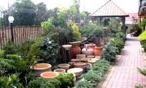 посадка растений в Симферополе, Крыму, Севастополе, Ялте, Алуште